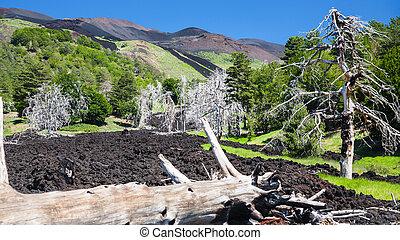 burned tree in hardened lava flow on Etna slope - travel to...