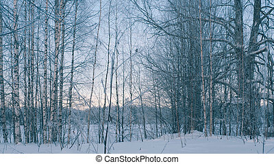Winter forest in a hoarfrost. - Cloudly winter day in...