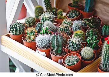 cactuses in a flower shop