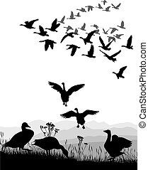 Geese - winged migration - Vector illustration shore lake...