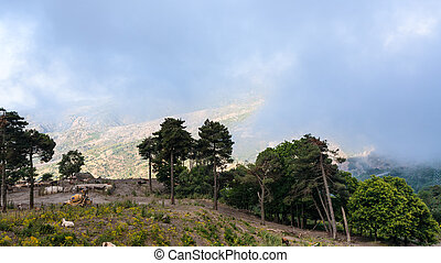 pasture in Etna region of Sicily - travel to Italy - pasture...
