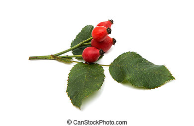 rosehip berries on a white background