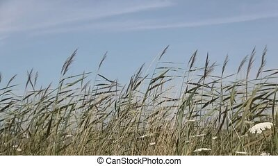 Waving grasses in the wind.