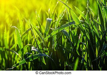 grass and sun light - Green grass and sun light