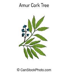 Amur cork tree phellodendron amurense , chinese medicinal...