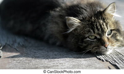 Gray cat basking in the sun - Fluffy gray cat is basking in...
