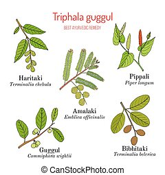 Best Ayurvedic herbal remedy formulation, Triphala guggul...