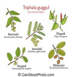 Best Ayurvedic herbal remedy formulation, Triphala guggul...