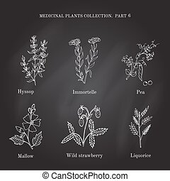 Vintage collection of hand drawn medical herbs and plants...