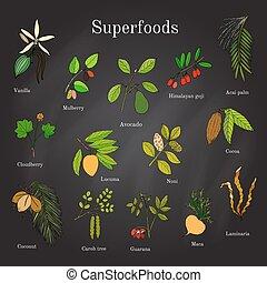 Set of hand drawn superfood acai, goji, cacao, lucuma,...