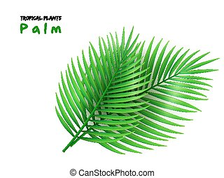 vector illustration of isolated realistic palm leaves