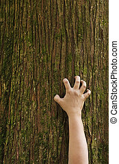 Hand clawing up a cedar tree trunk - A hand grips the trunk...