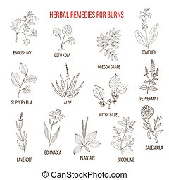Collection of herbs for burns. Hand drawn botanical vector...