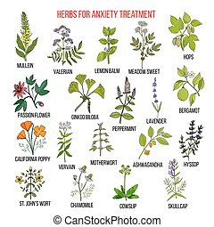 Collection of herbs for anxiety treatment. Hand drawn...