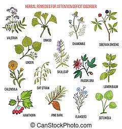 Collection of herbs for attention deficit disorder. Hand...
