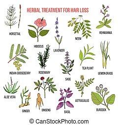 Medicinal herbs for hair loss treatment. Vector hand-drawn...