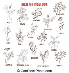 Collection of herbs for angina treatment. Hand drawn...
