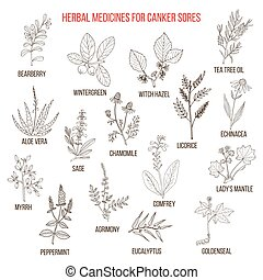 Best herbal remedies for canker sores. Hand drawn set of...