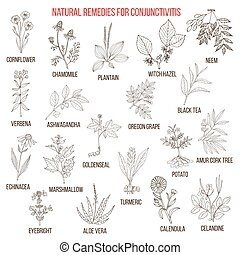 Best herbal remedies for conjunctivitis. Hand drawn set of...