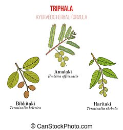 Best Ayurvedic herbal remedy formulation, Triphala with...
