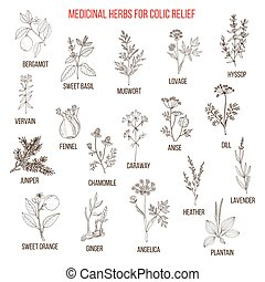 Best herbal remedies for colic relief. Hand drawn vector set...