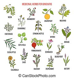 Best herbal remedies for gingivitis. Hand drawn vector set...