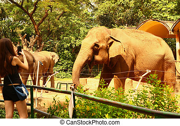 tourist girl take photo of elephants in the zoo
