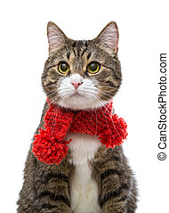 Gray cat in a red scarf isolated on white background