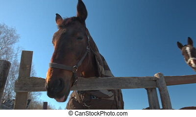 Close-up of horse in paddock, bottom view, wide angle