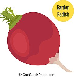 Garden radish in flat style with golden label. Vector...