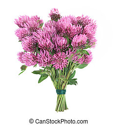 Clover Herb Flower Posy - Red clover herb flower posy tied...
