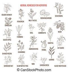 Best herbal remedies for hepatitis. Hand drawn set of...