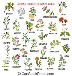 Best medicinal herbs for the immune system