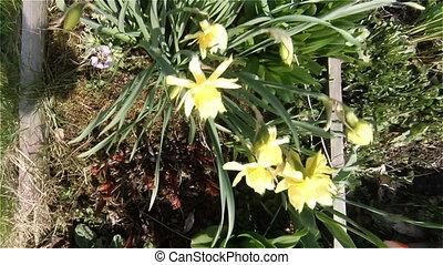 Bed of flowers garden, green