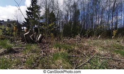 Felled timber, stumps. - Felled timber, stumps nature tree...