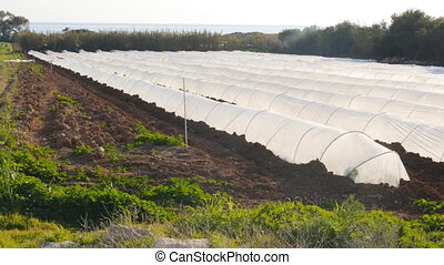 White greenhouse in country garden in spring - Spunbond...