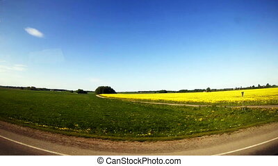 Travel along the field with yellow flowers.