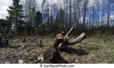 Felled timber, stumps.