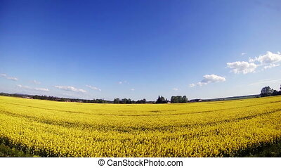 Travel along the field with yellow flowers. - Travel along...