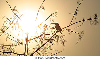 Sunset Kingfisher - A silhouette of an Indian kingfisher...