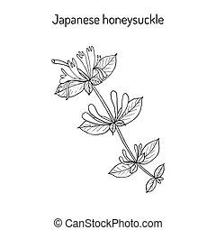 Japanese honeysuckle Lonicera japonica , medicinal plant....