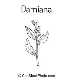 Damiana Turnera diffusa , medicinal plant. Hand drawn...