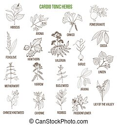Best herbs for cardio tonic