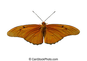 Julia Heliconian - (Dryas julia) isolated, clipping path...