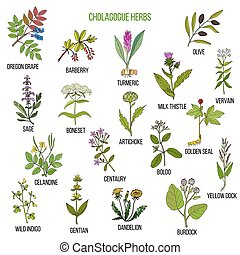 Cholagogue herbs. Hand drawn set - Cholagogue herbs. Hand...