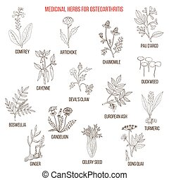 Best medicinal herbs for osteoarthritis. Hand drawn set of...
