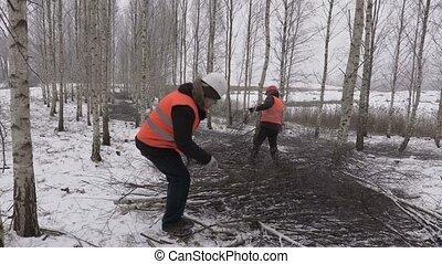 Lumberjacks sorting branches in birch grove