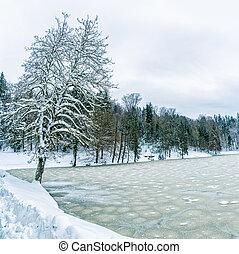Frozen lake in Zagorje, Croatia - Frozen lake and tree near...