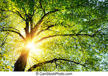 The sun shining through the branches of a tree