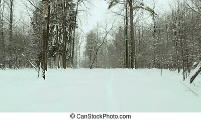 Footpath in the winter forest. Used professional gimbal stabilazer